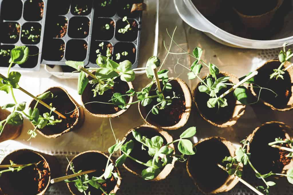 How To Teach An Autistic Child To Respect Plants 🌿